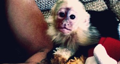 Justin Bieber with a monkey