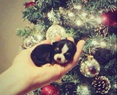 Cheryl Cole's Christmas