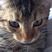 Image 3: Cat Graham
